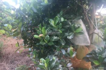 Cần bán gấp vườn trái cây gần chợ 13 Phú Lập, 2 nhà C4, 300m TC, MT bê tông giá 2,1 tỷ
