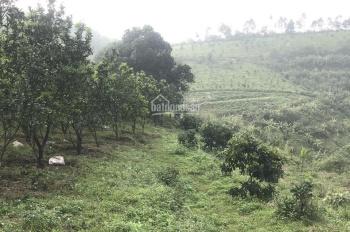 Chuyển nhượng lô đất 15ha toàn bộ đã trồng cây ăn quả tại Lương Sơn Hoà Bình