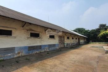 Cho thuê kho xưởng đất Long Biên DT: 500m2 10.000m2, giá 47đ/m2