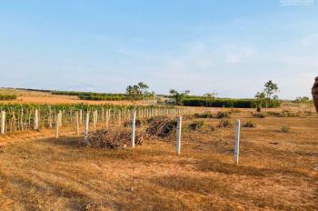 Còn 1 lô duy nhất đất Hồng Thái Bắc Bình, Bình Thuận giá siêu hạt dẻ 49.000đ/m2. LH Thoa 0909943694