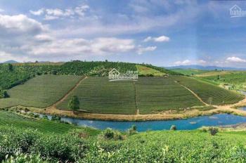 Bán đất xây biệt thự 510 m2, giá chỉ 2,7tr/m2, tại Đà Lạt, sổ hồng riêng, LH 0901401597