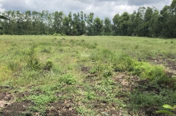 Chính chủ ngộp lãi mùa Covid-19 cần bán 5800m2 đất vườn ở Thạnh Lợi, Bến Lức