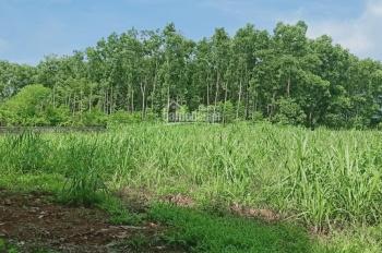 Chính chủ cần bán gấp lô đất nghỉ dưỡng, DT: 1564m2 tại xã Yên Bài, Ba Vì, Hà Nội