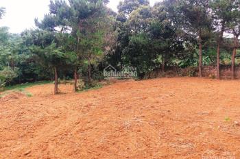 Bán gấp mảnh đất 3800m2/ 400m2 TC số đo thực tế là 5600m2 ở Lương Sơn - Hòa Bình