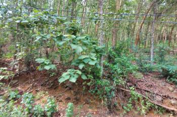 Cần bán lô đất xóm Đồng Âm, xã Đông Xuân, Quốc Oai, Hà Nội S 1980m2 có 200m2 thổ cư