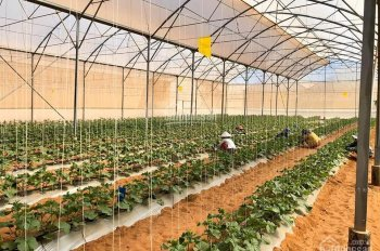 Bán đất giá rẻ ngay xã Hồng Thái, Bắc Bình chỉ 280 triệu/5000 m2, đón đầu đầu tư, LH: 0902.910.901