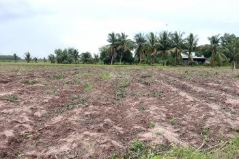 Bán đất chạy bệnh cho ngoại chỉ 255 triệu hết đất