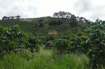 Cần bán 1,5 mẫu đất mặt tiền bê tông, giá cực rẻ, Bảo Lộc, Lâm Đồng