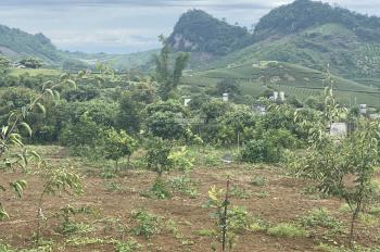 Chỉ còn lô duy nhất đất Mộc Châu, Sơn La. DT 2500m2, giá 2,9 tỷ