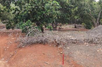 Bán vườn điều 9 năm tuổi xã Tân Hưng, Đồng Phú 340tr/lô sổ hồng riêng