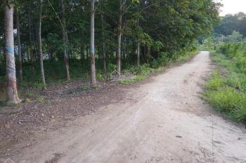 Cần bán gấp 1.3 hecta đất hồ Suối Giai Tân Lập Đồng Phú Bình Phước có 30m mặt tiền, giá 7 tỷ/ha