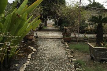 Tôi chính chủ cho thuê đất vườn ngay trung tâm thành phố Nha Trang phù hợp mọi ngành nghề