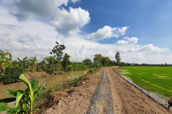 Bán 721m2 đất ruộng giá rẻ, xã Mỹ Thọ, Huyện Cao Lãnh, Đồng Tháp