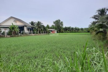 Đất Phú Hưng, Bến Tre 3500m2 đường xe hơi tới đất. Cần tiền bán nhanh