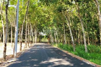 Chính chủ cần bán miếng đất xã Phú An, diện tích 2.700m2