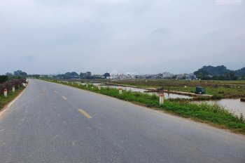 Bán trang trại tại thôn Năm Trại, xã Sài Sơn, huyện Quốc Oai, cây ăn quả sắp đến kỳ thu hoạch