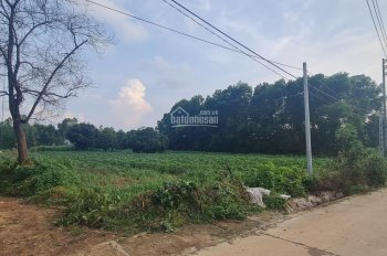Chính chủ đứng bán 5 mảnh đất cực phẩm hiếm có tại Suối Hai, Cẩm Lĩnh, Lân cận