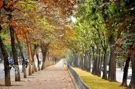 Bán nhà khu phố kinh doanh căn hộ homestay Nội Miếu quận Hoàn Kiếm 36m2 3t  7,9 tỷ Lh 0943.398.072