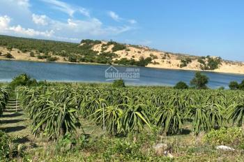 Gia Hưng Land bán đất vườn Bình Thuận từ 90k/m2 gần biển Hoà Thắng, sổ sẵn chính chủ Lh 0938 677909