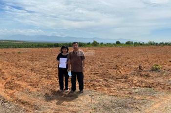 Đất Bình Thuận chỉ 699 triệu 1 ha 10.000m2