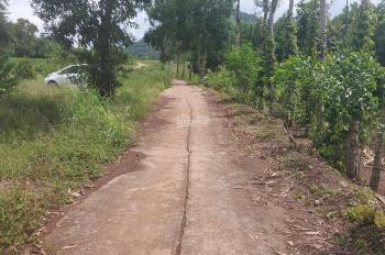 1,2ha đất trồng cây lâu năm, mặt tiền 240m, đường bê tông 4m, cách 765 300m