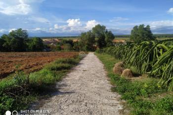 Đất sào Phan Thiết Bình Thuận giá rẻ 1000m2 làm biệt thự vườn và những sản phẩm từ 1ha đến 10ha