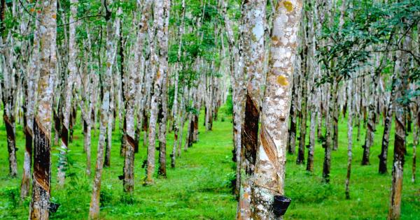 Đất trồng cây lâu năm là gì và các vấn đề pháp lý liên quan