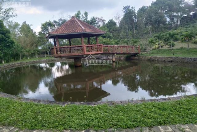 Khu nghỉ dưỡng 42 x 93m mặt tiền Lê Thị Riêng, khu dân cư đông đúc
