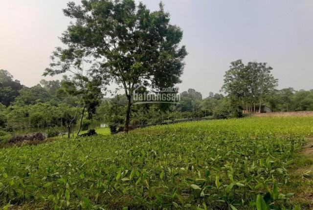 Tìm chủ mới lô đất cách đường Hồ Chí Minh 1,5km cách đường nhựa liên xã 100m, liên hệ được giá tốt