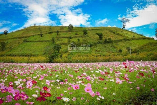 Biệt thự view hồ 18ha - view rừng thông ôn đới 25ha - view đồi chè 3.000ha xanh bạc ngàn