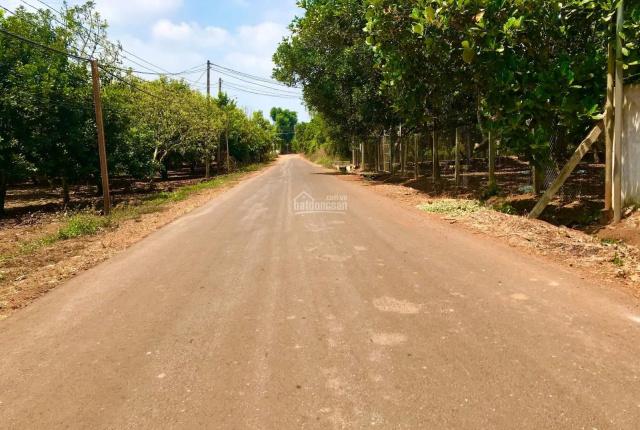 Cần sang nhượng 4.3ha vườn cây ăn trái tại Xuân Lộc, thu nhập 1 tỷ/năm