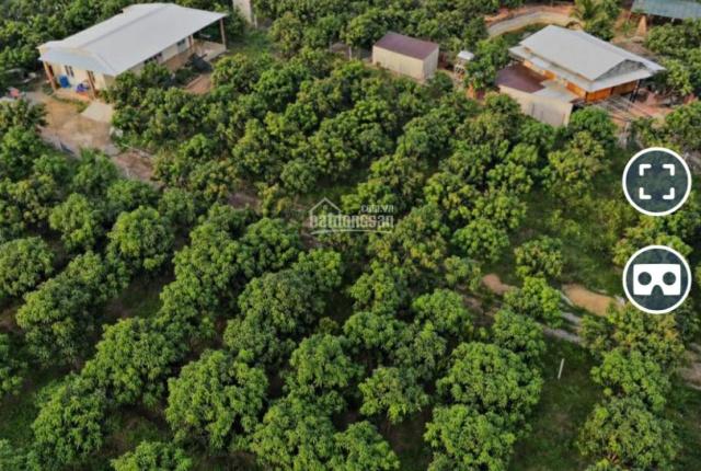 Đất vườn làm Farm du lịch nghỉ dưỡng gần sông Đồng Nai, Sông La Ngà sở hữu ngay chỉ 370 tr/sào