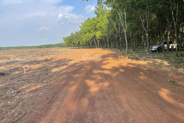 Bán đất kế bên KCN Hoa Lư Lộc Tấn, Lộc Ninh, Bình Phước 1000m2 giá 290tr, sổ hồng công chứng liền