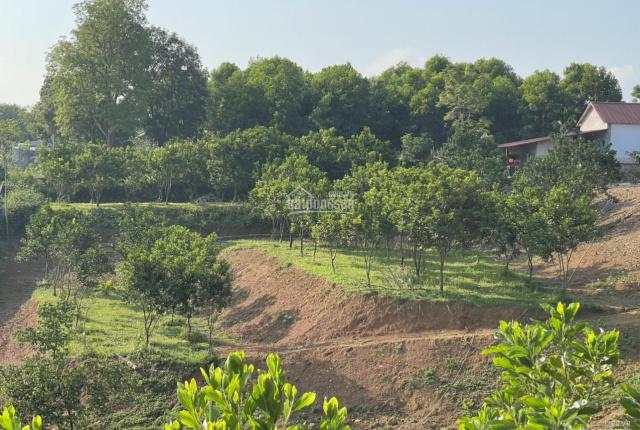Bán đất Nhuận Trạch, Lương Sơn, Hòa Bình giá rẻ nhất thị trường diện tích 5.200m2