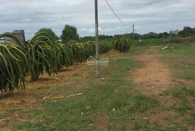 Chính chủ cần bán 12ha đất đang trồng thanh long tại xã Bình An, huyện Bắc Bình, tỉnh Bình Thuận