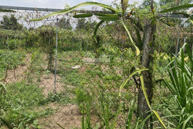 Bán đất trồng cây lâu năm giá rẻ đường T6 nối dài, xã Hưng Long, Bình Chánh