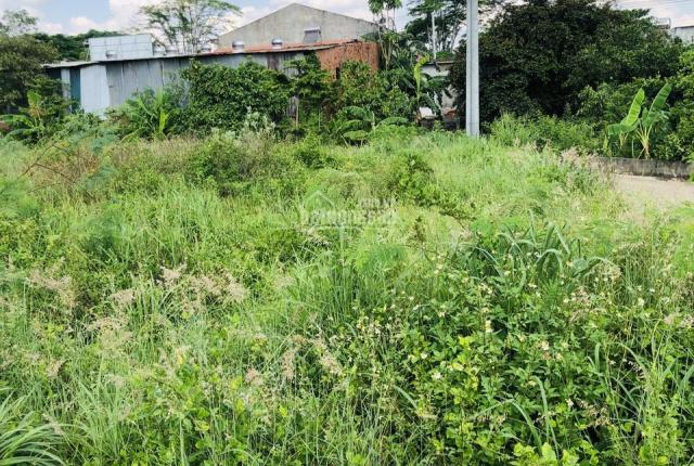 Chính chủ bán lô đất 3 mặt tiền ấp 3 Đường Nguyễn Hoàng, xã Sông Trầu, huyện Trảng Bom, Đồng Nai