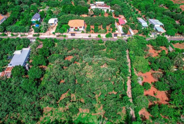 Đất vườn trái cây Long Tân- Đất Đỏ, giá chỉ 2.xxx