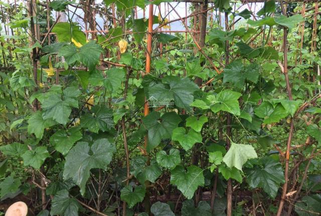 Cần sang lại trang trại nhà vườn có sẵn cây ăn trái trang trại gà vịt vào ở ngay xã Hòa Ninh