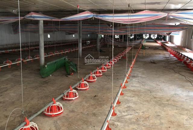 Chính chủ bán trang trại gà công nghiệp Hòa Bình, 10982.6m2, có nhà, chuồng tự động, giấy tờ đầy đủ