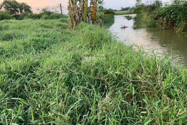 Kẹt tiền bán gấp 2500m2 đất thổ ven sông Cần Đước giá rẻ