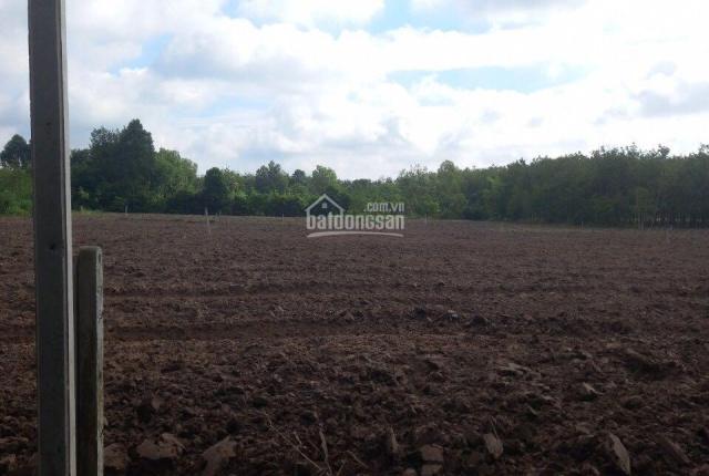 Hàng hiếm đất thổ cư 1340m2, 2 mặt tiền 6-8m, Đôn Thuận, Trảng Bàng, Tây Ninh. Giá 2 triệu/m2