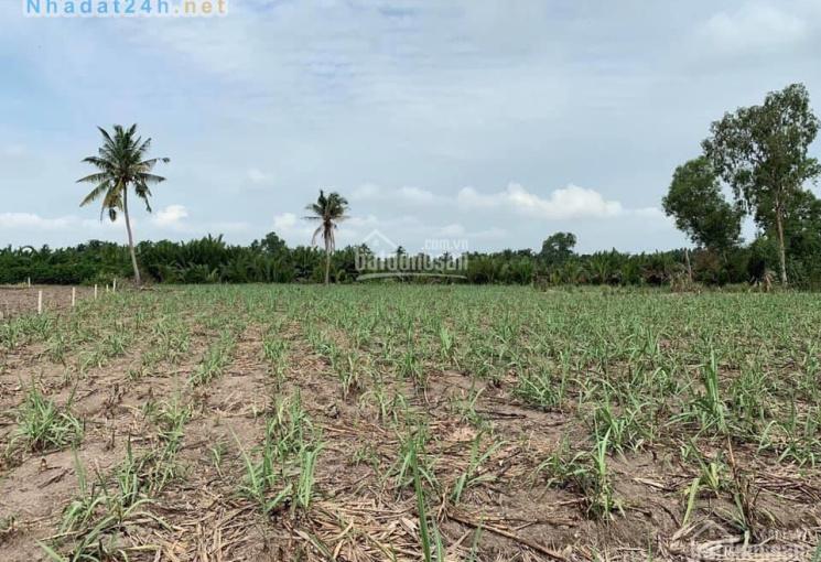 Bán đất nông nghiệp xã Phước Khánh, 700 triệu/1000m2, có đường xe máy vào đất