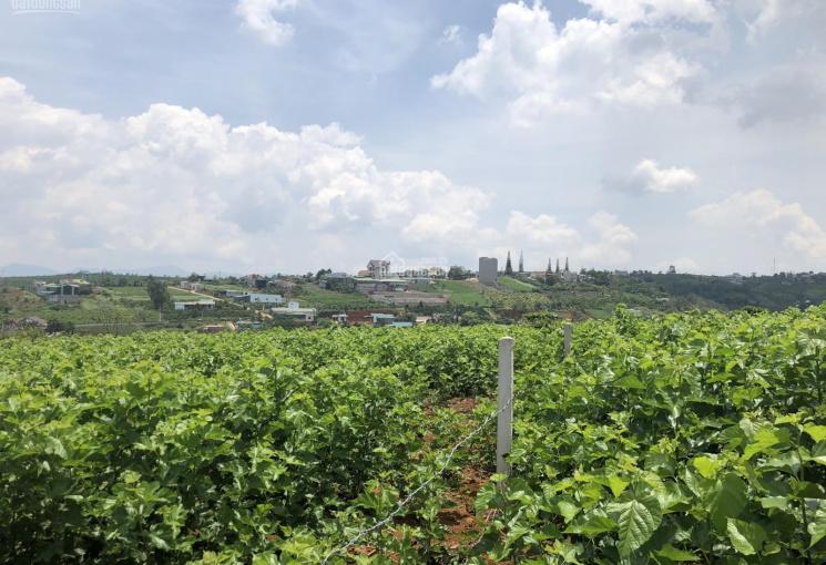 Bán lô đất mặt tiền Tản Đà, Bảo Lộc, ngang 20m, giá 3.6 tỷ, có thổ cư