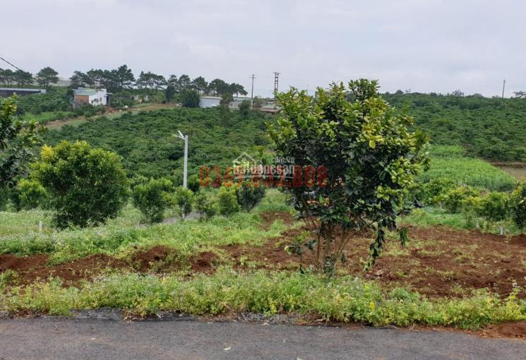 Bán đất nền ngã 5 Dambri, gần TP. Bảo Lộc. Giá đầu tư F0 chỉ từ 3,9 tr/m2, full TC, tặng vườn rau