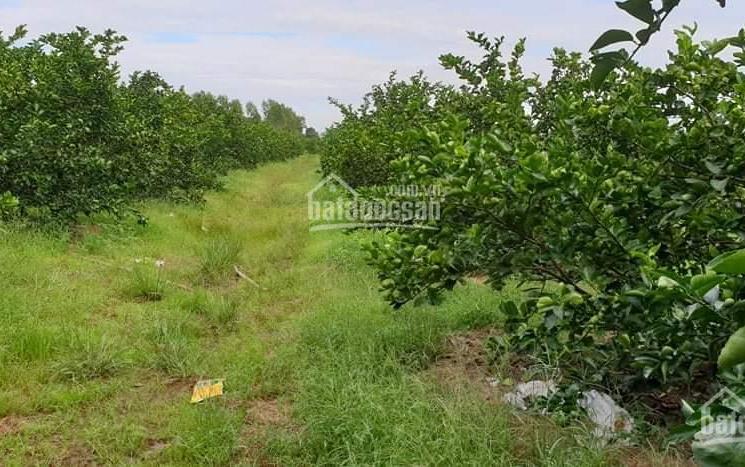 Tổng hợp 1 số lô đất vườn, đất vườn có thổ cư, đất nông nghiệp giá tốt, thích hợp đầu tư nhà vườn
