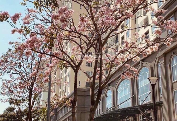 Chuyên cho thuê căn hộ Sài Gòn Mia từ 1 - 3PN, giá từ 7tr nhà trống mới 100%, LH: 0946867694