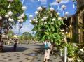 Chúng tôi cần mua nhà phố cổ nằm trên 2 trục đường Trần Phú hoặc Nguyễn Thái Học gấp