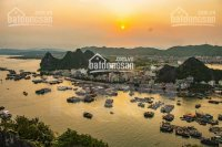Bán hòn đảo đẹp tuyệt 50ha đảo trà bản xã bản sen vân đồn chỉ 30 tỷ làm du lịch...lh 0979 66 88 16