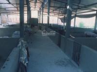 bán trang trại 9ha tại xã tiến bộ yên sơn tuyên quang